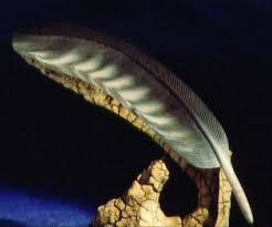falcon feather
