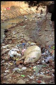 animals dying from pollution