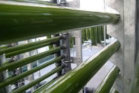 algae photobioreactor