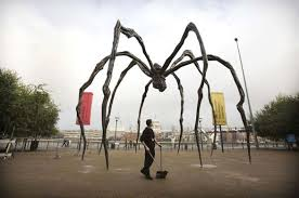pictures of giant spiders