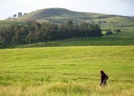fields grass