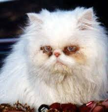 mistreated cats