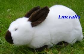 russian rabbit