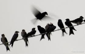 bird wire