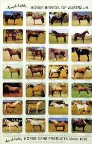 horse breeds poster