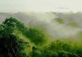 climate tropical rainforest