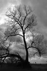 black and white tree photographs
