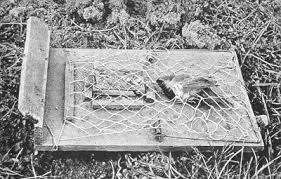 homemade bird trap