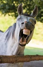 animals teeth