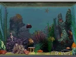 fish tanks salt water