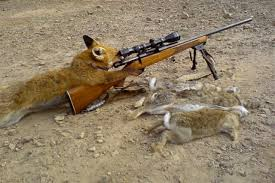 fox hunting pictures