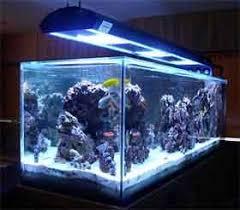 salt water reef tanks