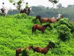 costa rica horseback riding