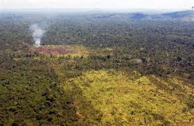 forests of south america