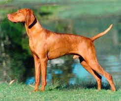 bird hunting dogs breeds