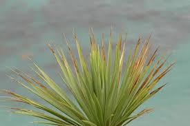 plant ocean