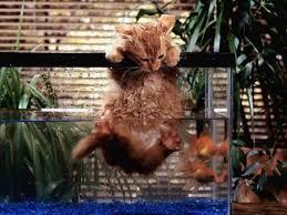 aquarium cat fish