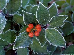 christmas holly wallpaper
