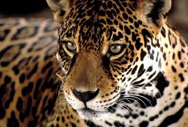 brazil wild life