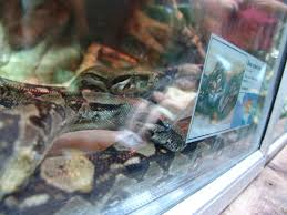 python tanks