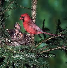 cardinal bird houses
