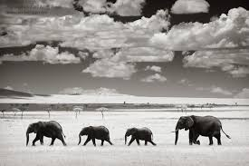 black and white wildlife photography