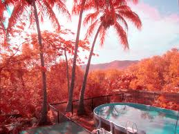 digital infrared photo
