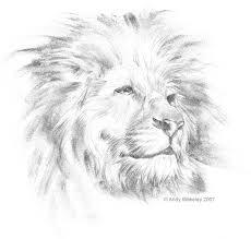 lion head pictures