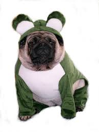 frog clothes