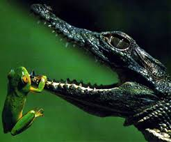 fotos de anfibios