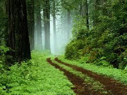 عکس جاده در داخل جنگل سر سبز