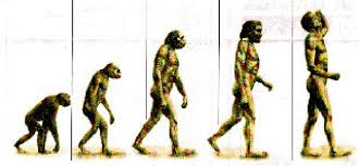 evolution of early man