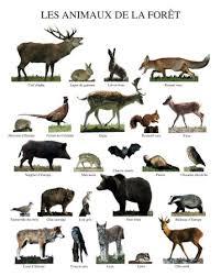 flora y fauna bosque
