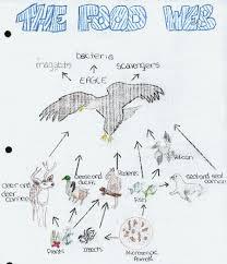 bald eagles food chain