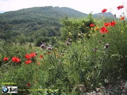 portugal flora
