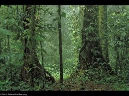 costa rica tropical rainforest