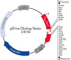 pgex vector map