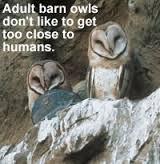 barn owls food