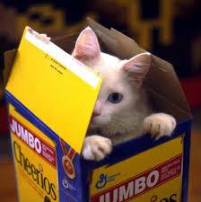 jumbo cat