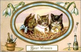 happy new year cats