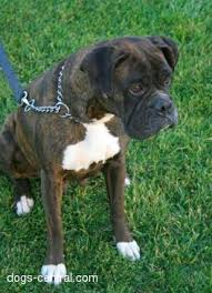 boxer dog kennels