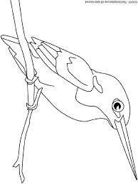 kingfisher clip art
