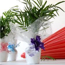mini palm plants