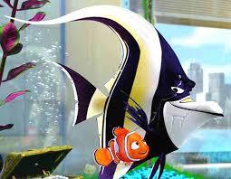 finding nemo fish tank scene
