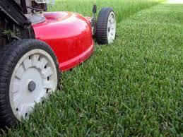 cutting yard