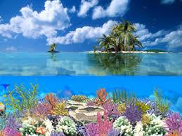 underwater desktop pictures