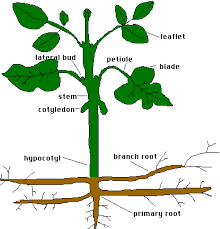 plants seeds