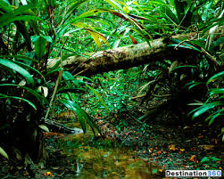 rainforest amazon