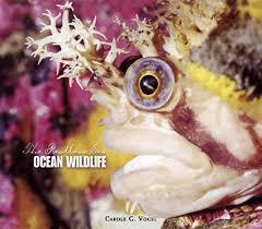 ocean wildlife pictures
