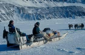 inuit dog sleds